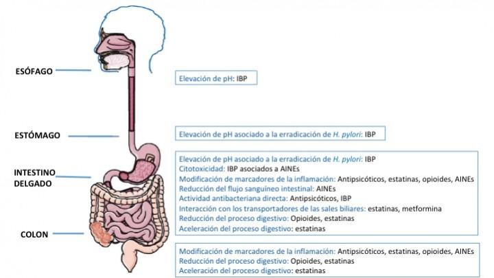 interacciones de microbiota intestinal con obesidad, resistencia a la insulina y diabetes tipo 2